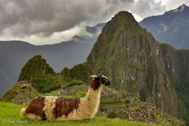 Lama near Machu Picchu © Frank Chiarelli
