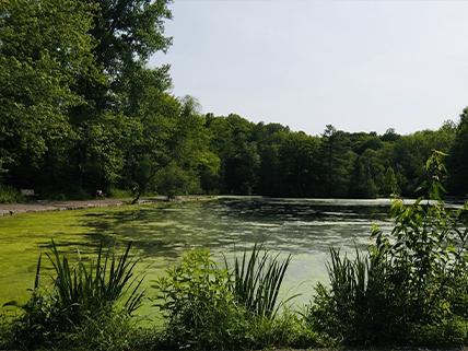 Pond at Saint John's Conservation Loop. Photo credit: Bobby D., 2019, AllTrails.com