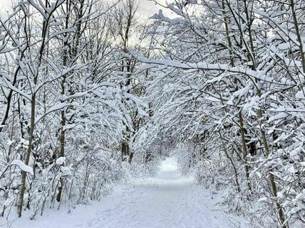 Winter trees at Short Hills Provincial Park. Photo credit: Christine Huang, 2020, AllTrails.com