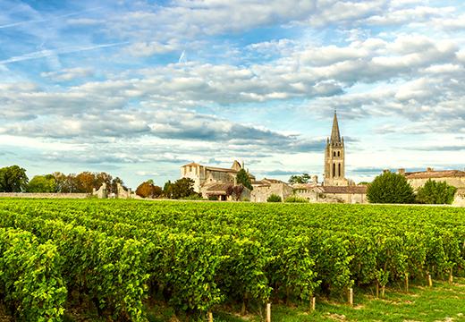 Vineyard in Bourdeaux, France